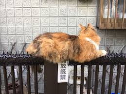 Cats Are Evolving Scared People Are Sharing Pics Of Kittens Immune To Cat Deterrent Spikes Bored Panda