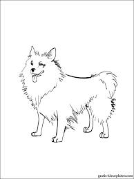 Puppy Hond Kleurplaat Voor Print Gratis Kleurplaten
