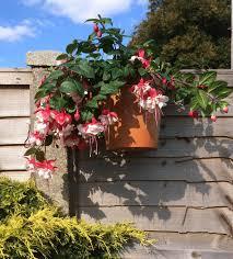 6 Plant Pot Hanger Holder Bracket Rings Hang 7 Flower Pots Fence Panels Garden For Sale Online Ebay