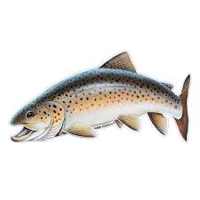 Brown Trout Fish Decals Stickers For Car Truck Or Boat Saber Tooth Co