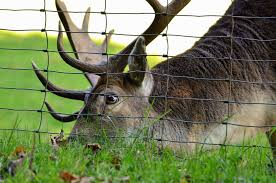 Deer Fence Diy Guide How To Install A Deer Fence And Keep Wildlife Out Of The Garden Or Your Property Welded Wire Fence