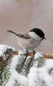 Pin by Hilda Watson on Winter scenes | Beautiful birds, Pretty birds, Birds  painting