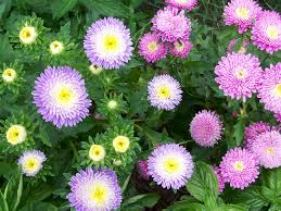 12 flowers to plant in summer