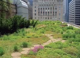the history of rooftop gardens turf