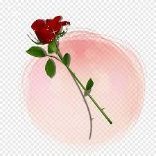 بتلة السماء نمط بتلات الورد الوردي عائم أبيض Png