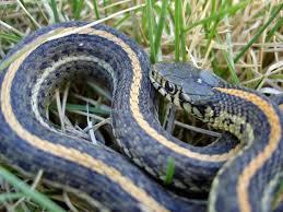garden snakes lovetoknow