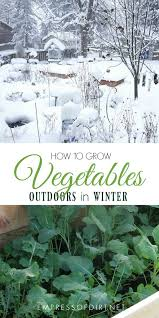 grow vegetables outdoors in the winter