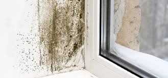 12 mon types of mold in homes