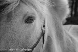 De Paarden Oppas Service Onderzoekt Archieven Paarden Oppas