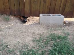 Request Dyi Suggestions And Tips To Keep My Yard Safe Neighbor S Dog Digging Under Fence Diy