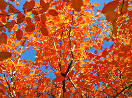 every leaf is a flower wallpaper autumn