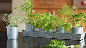 best herbs for growing indoors