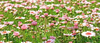 guide to making a wildflower meadow