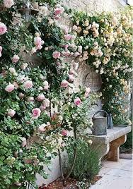 climbing roses on house ideas small