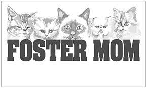 Amazon Com Cafepress Foster Mom Cats Rectangle Sticker Rectangle Bumper Sticker Car Decal Home Kitchen