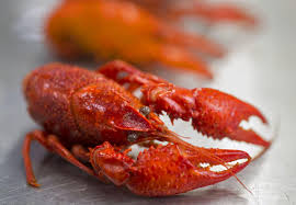 Type 'lobster' into your smartphone in ...