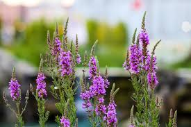 خلفية زهور مدهشة اجمل صور المصمم ادم حلس