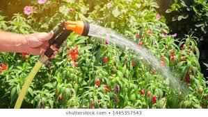 stock y vectores sobre hose sprayer