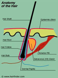 why the hair needs protein to re grow