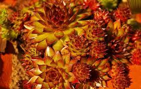 petal food produce autumn botany