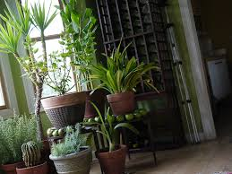 care and maintenance to the houseplants