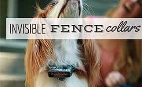 Pros And Cons Of An Invisible Fence Collar Caninejournal Com