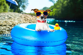 Dogs Who Have Really Enjoyed Summer - LIFE WITH DOGS