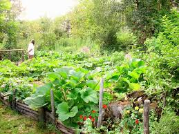 organic kitchen gardening work