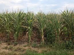 Iowa drought webinars begin this week | AG | kmaland.com
