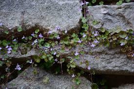 L'importanza del muro in pietra nell'orto, elemento di confine e ...