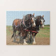 clydesdale horse photo gifts on zazzle