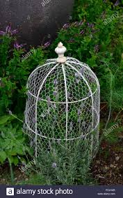 Chicken Wire Garden High Resolution Stock Photography And Images Alamy