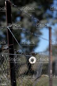 Electric Fence Insulator Stock Photo Download Image Now Istock