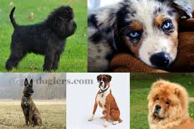 dog breeds a z list with images part