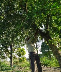 "Forest Man of India"" Jadav Payeng Singlehandedly Revives Majuli Island  Forest"