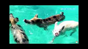 Đàn Heo Đi Bơi - Con Heo Đất Xuân Mai - Nhạc Thiếu Nhi Vui Nhộn Hay Nhất