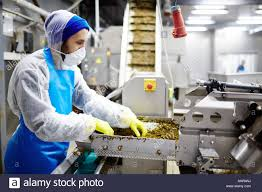 Working in seafood factory Stock Photo ...