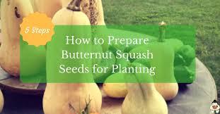 how to prepare ernut squash seeds