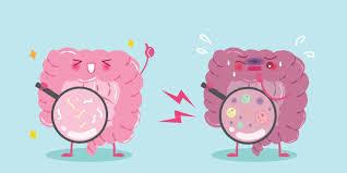 Micróbios intestinais ajudam terapia contra câncer; antibióticos ...