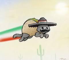 taco cat nyan cat photo 26042544