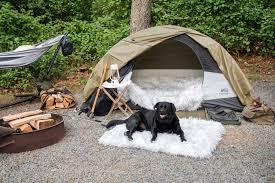 Pet Travel Travel Leisure