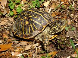 Pet Box Turtles How To Take Care Of A Turtle