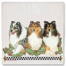 shetland sheepdog sheltie dog