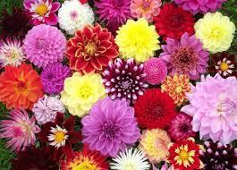 اجمل ورود الربيع تشكيله الربيع مع اجمل باقات الورد احلام مراهقات