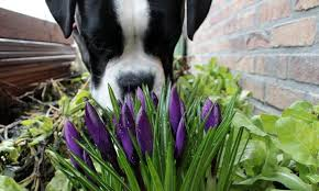 10 plants that are poisonous to pets