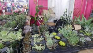 2019 exhibitors sa festival of flowers