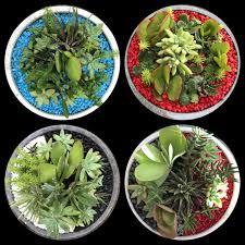 succulent bowls mish s gardens