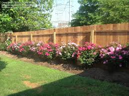 Plantfiles Pictures Shrub Rose Knock Out Rosa By Jess2132000