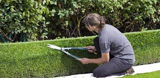 Creating Privacy In Your Outdoor Space Best Tree Shrub Choices Design Tips Planting Advice Arbor Experts Tree Care In Dayton Oh