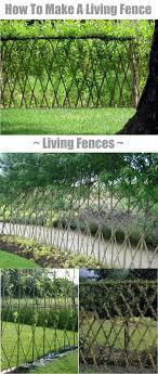 Living Fences How To Make A Living Fence For Your Garden Living Fence Willow Fence Garden Fence
